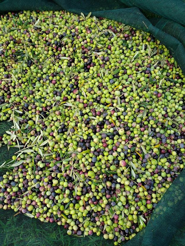 olivesmall11