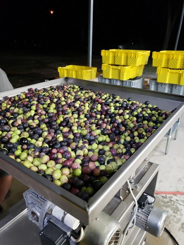 olivesmall15