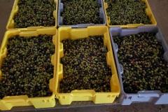 olivesmall16